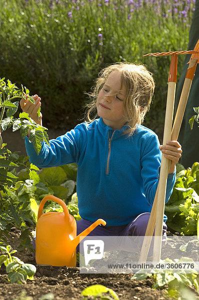 Salat - 8 Jahre alt