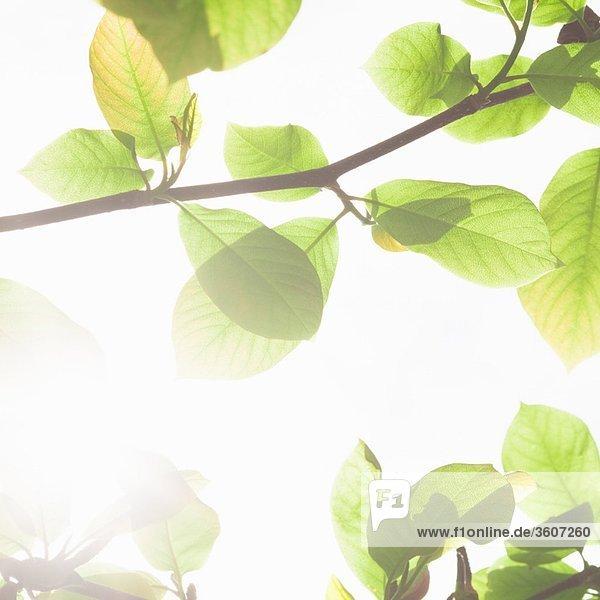 Grüne Blätter gegen den Himmel