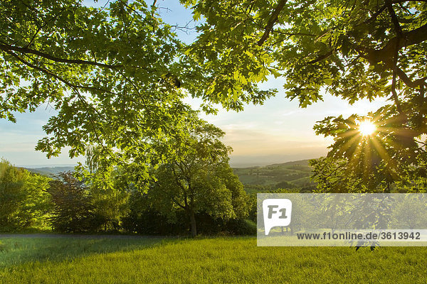 Naturschutzgebiet Sonnenuntergang Wald schwarz Abenddämmerung Gegenlicht Deutschland Baden-Württemberg Naturschutzgebiet,Sonnenuntergang,Wald,schwarz,Abenddämmerung,Gegenlicht,Deutschland,Baden-Württemberg