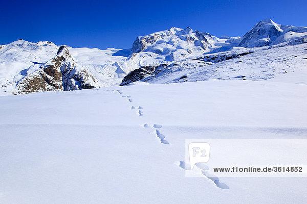 Schweizer Alpen  Hasenspuren  Monte Rosa  Dufourspitze - 4634 m  Crossbow - 4527 m  Wallis  Schweiz