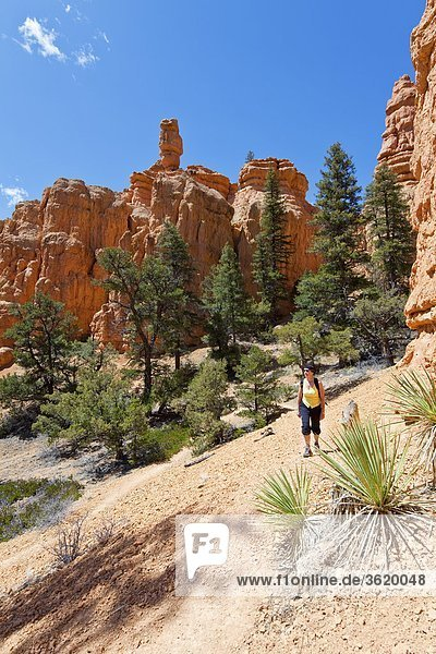 Red Canyon  Dixie National Forest  Utah  USA