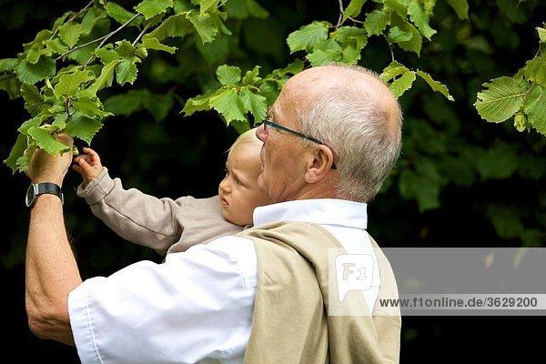 Großvater trägt Kleinkind an einem Baum