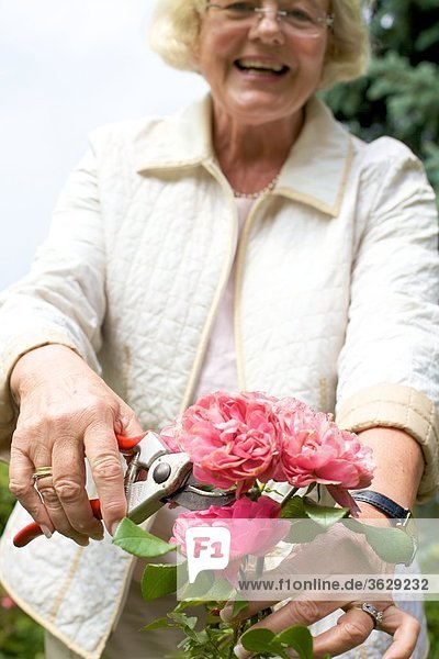 Frau beschneidet Rosen im Garten