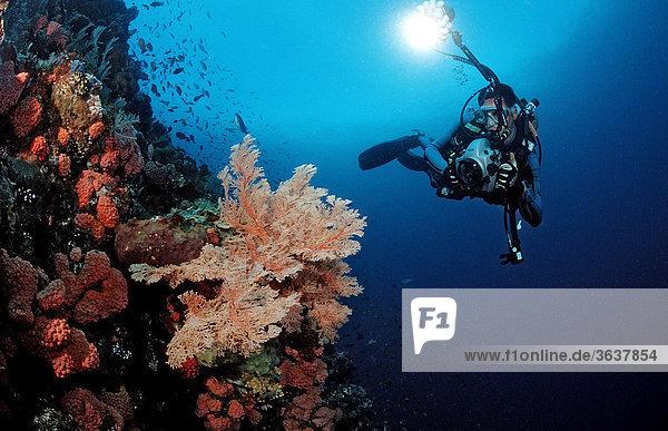 Taucher fotografiert an Korallenriff  Raja Ampat  Irian Jaya  West Papua  Indo-Pazifik  Indonesien  Südostasien