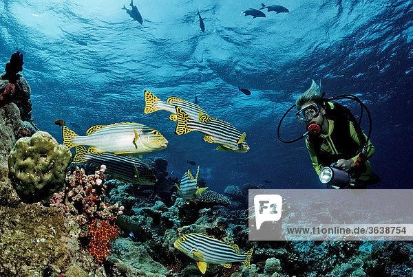 Taucher am Korallenriff  Malediven  Indischer Ozean