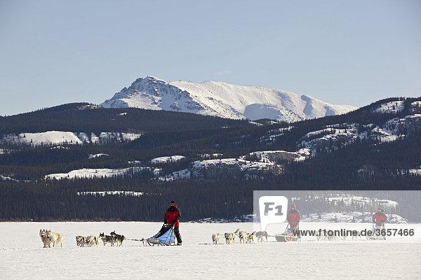 Drei Männer  Musher mit Schlittenhundegespannen  lenken Hundeschlitten  Team von Schlittenhunden  Alaskan Huskies  dahinter Berge  gefrorener Lake Laberge See  Yukon Territorium  Kanada