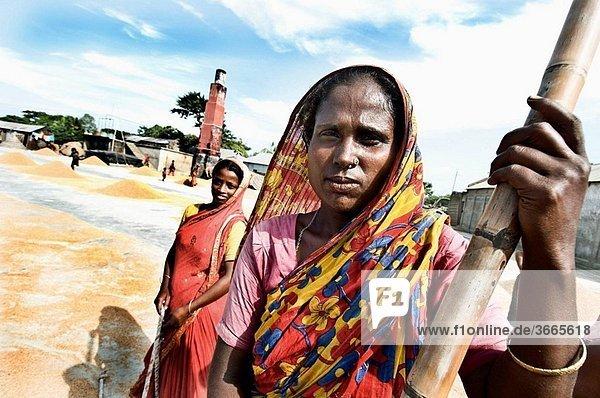 Rice harvesting  women at work  Sylhet  Bangladesh