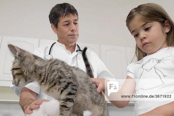 Vet Katzen mit einem Mädchen suchen neben ihm ernsthafte Prüfung