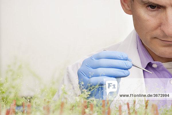 Wissenschaftler forschen an Pflanzen in einem Labor