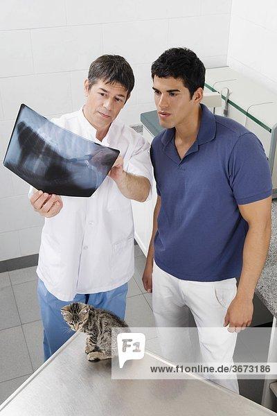 Tierarzt untersucht eine Katze x-ray