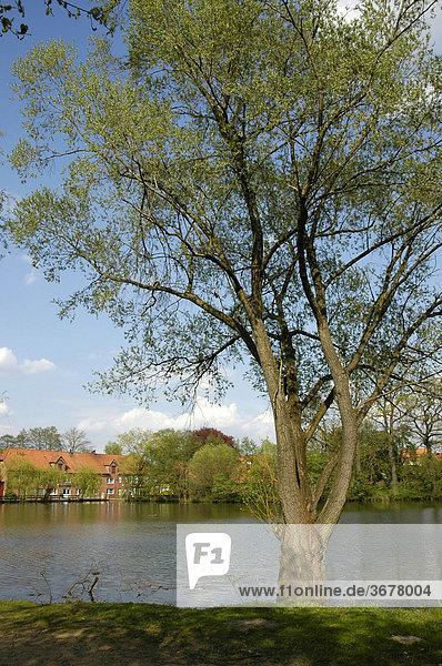 Am mühlenteich in bienenbüttel