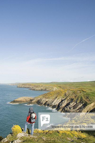 Wanderin schaut auf Küste  Meer  Aussichtspunkt  Pembrokeshire Nationalpark  Wales  Großbritannien  Europa