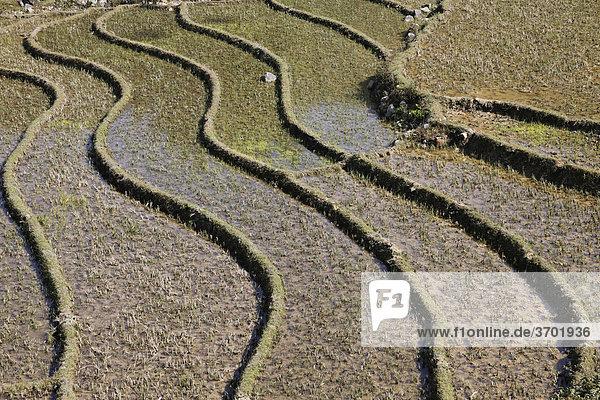 Reisterrassen in den Bergen von Sapa  Vietnam  Südostasien