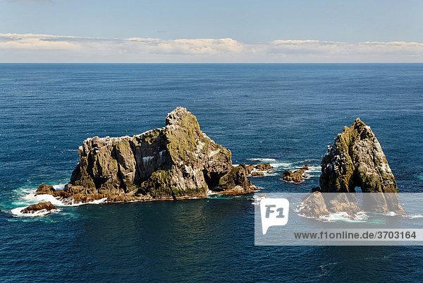 Felsen mit Basstölpeln (Morus bassanus) vor Fair Isle  Shetlands  Schottland  Großbritannien  Europa