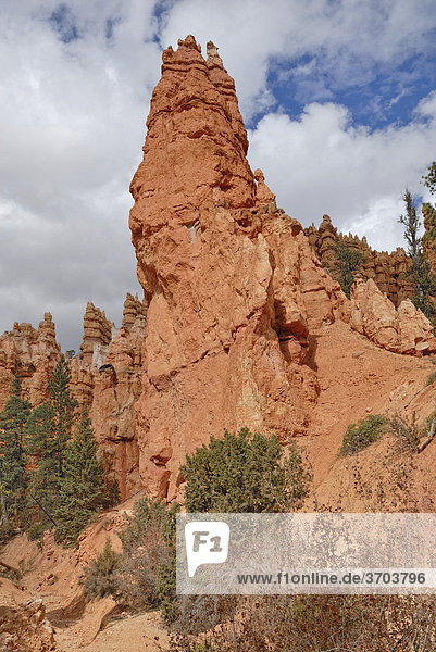 Monumentale Kalksteinsäule  ein sog. Hoodoo  Bryce Canyon Nationalpark  Utah  USA