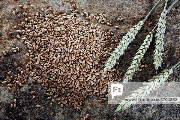 Weizenkörner (Triticum) mit Ähren auf einer Steinplatte