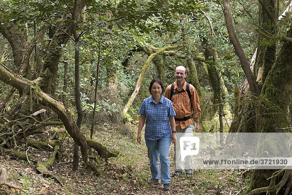 Lorbeerwald Nationalpark Garajonay - La Gomera Kanaren