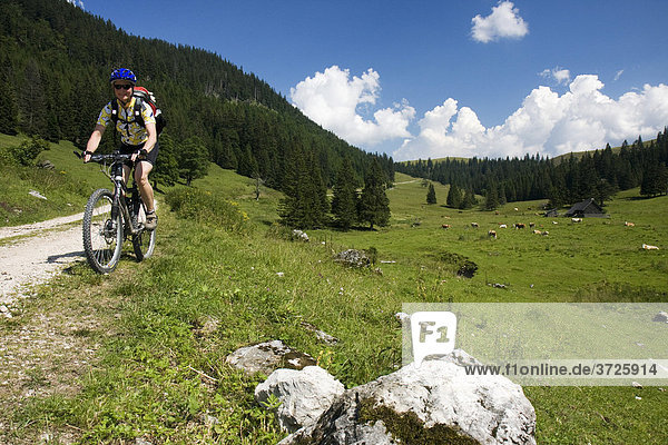 Mountain biker riding along an alpine pasture  Styria  Austria
