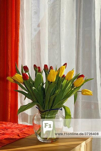 Tulpen (Tulipa) im Wohnzimmer  Frühling