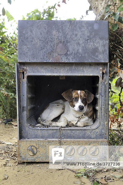 Old gas stove with a dog as a doghouse  Brazil  South America