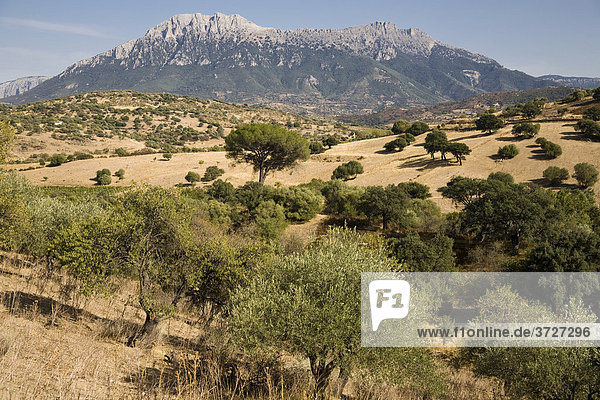 Landschaft bei Oliena mit dem Gebirgszug Supramonte  Barbagia  Provinz Nuoro