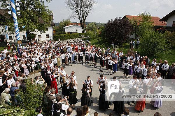 Maitanz in Eurasburg  Gemeinde Eurasburg  Landkreis Bad Tölz Wolfratshausen  Bayern  Deutschland  Europa