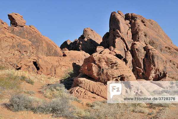 Rote Sandsteinfelsen  Valley of Fire State Park  Nevada  USA