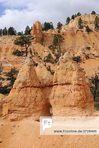 Felstürme aus Kalkstein  Hoodoos  Bryce Canyon National Park  Utah  USA