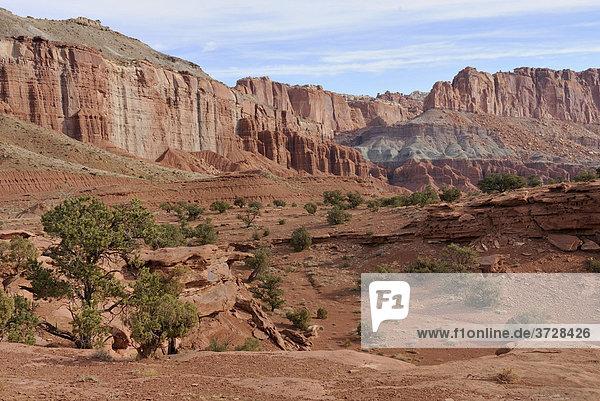 Blick vom Goosenecks Overlook  Felsformationen und alter Kiefernbestand (Pinus)  Capitol Reef National Park  Utah  USA