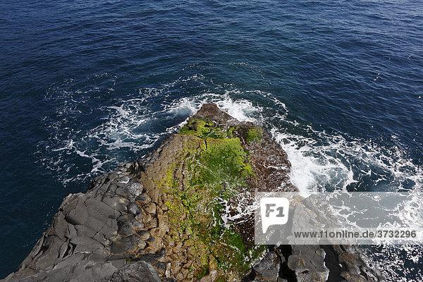 Fels mit grünen Algen am Charco Verde  Landschaftsschutzgebiet Paisaje protegido del Remo  La Palma  Kanaren  Kanarische Inseln  Spanien  Europa