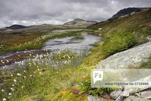 Rondane Nationalpark  Norwegen  Skandinavien  Nordeuropa