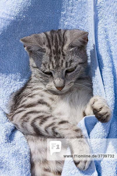 Getigerte Katze in Handtuch eingewickelt