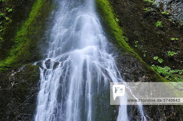 Marymere Falls,  Wasserfall,  Touristenattraktion,  Olympic Peninsula,  Nationalpark,  Washington,  USA