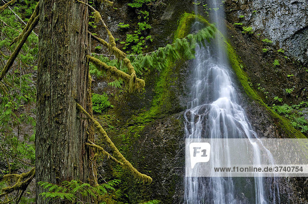 Marymere Falls  Wasserfall  Touristenattraktion  Olympic Nationalpark  Washington  USA  Nordamerika