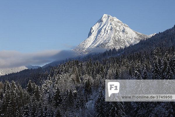 Guffert  Guffertspitze in Brandenberger Alpen nahe Achenkirch  Tirol  Österreich  Europa