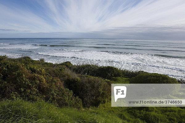 Overgrown green beach on the west coast  Karamea  South Island  New Zealand