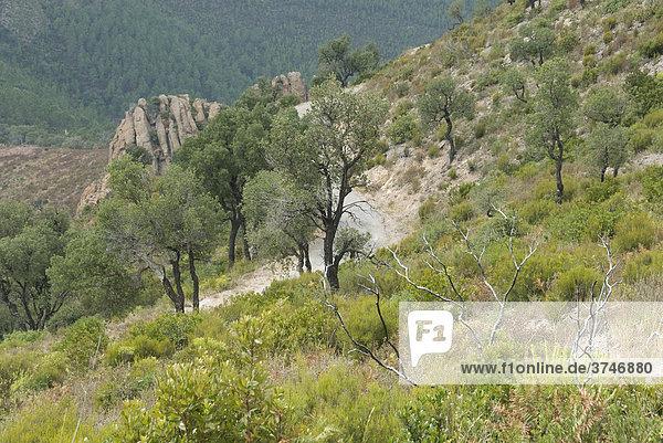 Erholte Natur nach Waldbrand vor einigen Jahren  Bäume und Büsche wachsen wieder  um die typische garrigue zu bilden  FrÈjus  Var  Frankreich  Europa