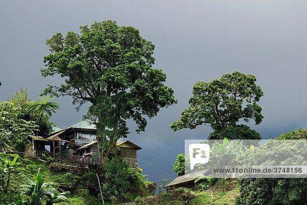 Hütte im Regenwald  Rio Ochos  Jamaika  Karibik  Mittelamerika