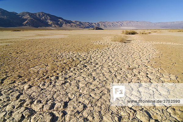 Desiccation cracks  arid loam soil at Stovepipe Wells in Death Valley National Park  California  USA  North America