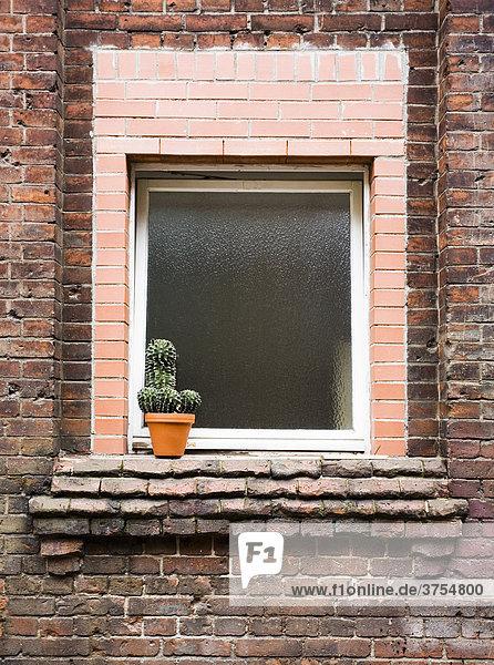 Blumentopf mit Kaktus an einem Hinterhoffenster in Berlin  Deutschland  Europa