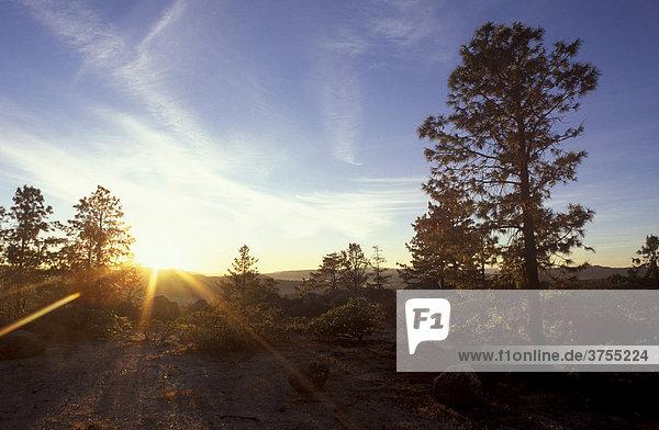 Sonnenaufgang bei Creel  Sierra Tarahumara  Sierra Madre Occidental  Chihuahua  Mexiko
