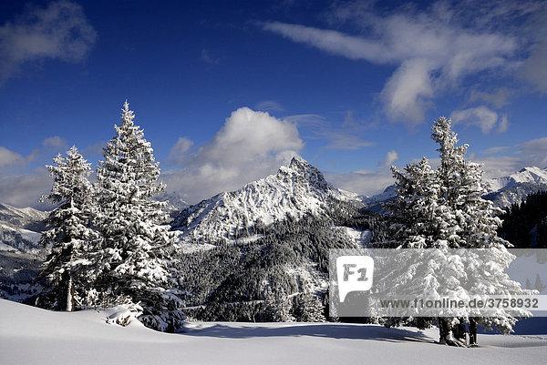 Schneelandschaft mit lockerem Baumbestand  hinten Berge  Pfronten  Bayern  Deutschland