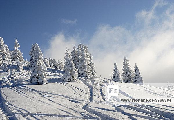 Schneebedeckte Fichtenbäume mit Skispuren in den tiroler Bergen Wildschönau Österreich