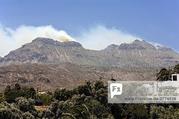 Forest fires  Gran Canaria  Spain