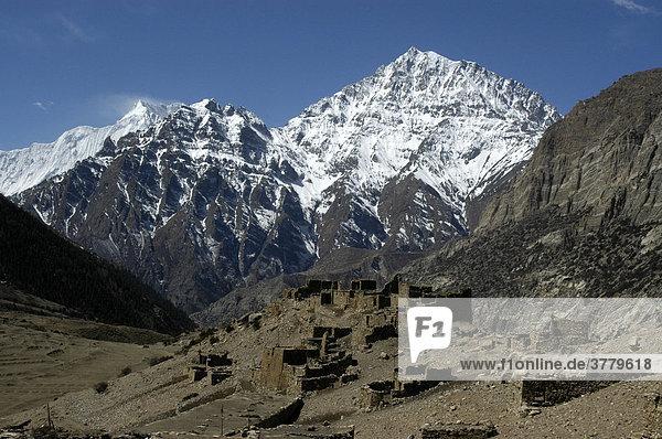 Einzeln stehende Steinhäuser vor schneebedeckter Bergspitze des Pisang Peak Chyakhu Nar-Phu Annapurna Region Nepal