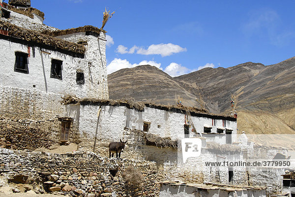 Traditional houses with donkey in village Shegar Tibet China