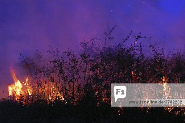 Bush fire at night  Gran Chaco  Paraguay