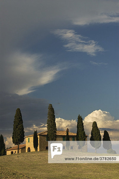 Cottage amidst cypresses  Val d'Orcia  Tuscany  Italy