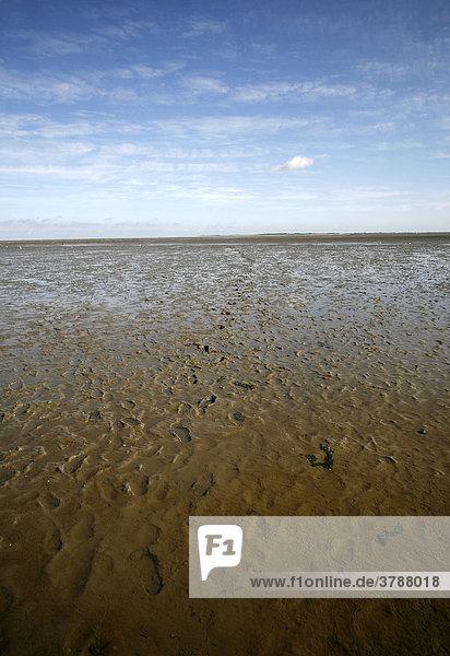 Fußspuren im Watt bei Ebbe in der Nordsee  Ostfriesland  Deutschland