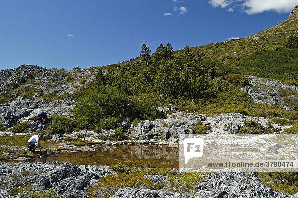 Kleine Seen am Cradle Cirque Overland Track Cradle Mountain Lake St Clair Nationalpark Tasmanien Australien
